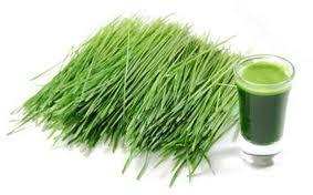 Jus vert aux herbes de blé