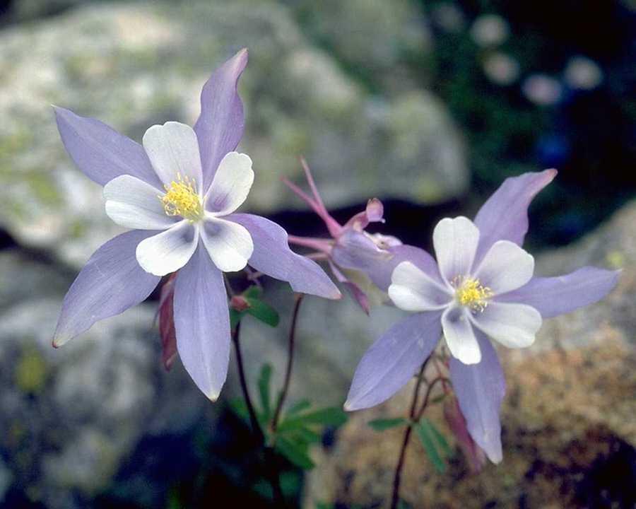 Fleurs Bach